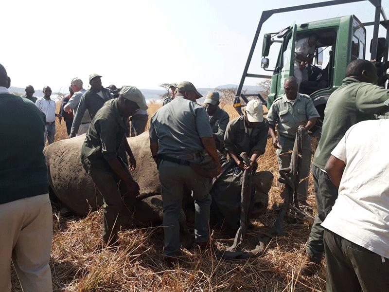 Ezemvelo KZN, Dept establish anti-rhino poaching task team