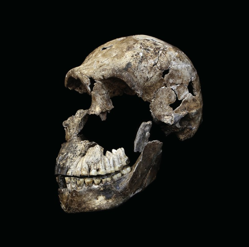 Human's Strange Cousin 'Homo Naledi' Lived More Recently Than Scientists Believed