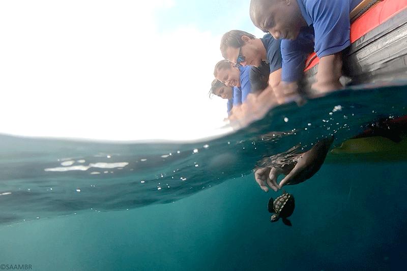 Loggerhead turtles released on World Turtle Day