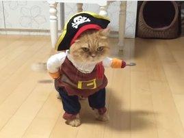 Zeon the cat