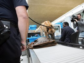 airport-luggage-search-afp_ehT81P2.jpg