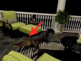 alligator porch scary