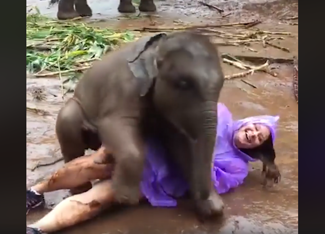a baby elephant smothering a tourist with hugs is what you need today