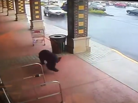 bear in liquor store