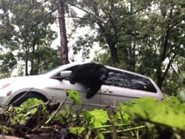 bear smashes car window