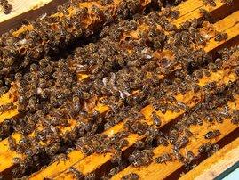 honeybees ceiling