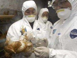 bird-flu.jpg
