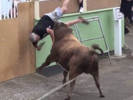 bull charging image scary