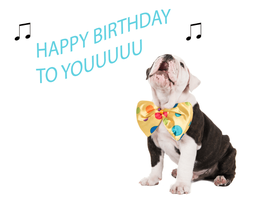 Bulldog - happy birthday
