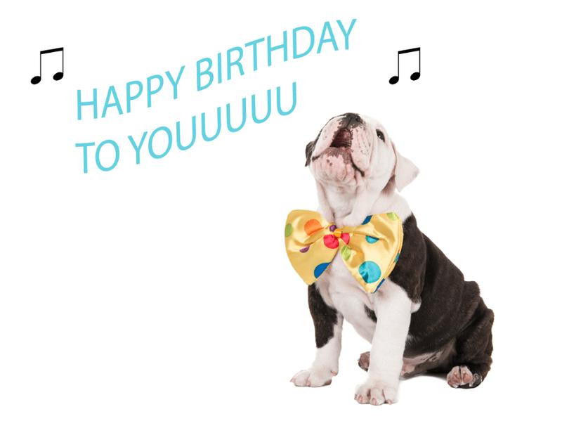 Bulldog - happy birthday