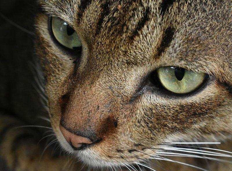 Cat-generic