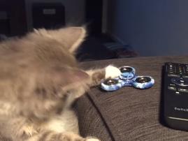 cat fidget spinner image funny