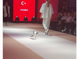 cat on catwalk istanbul