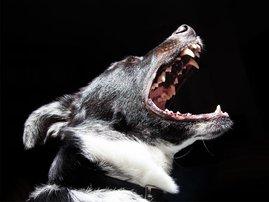 Child mauled by dog