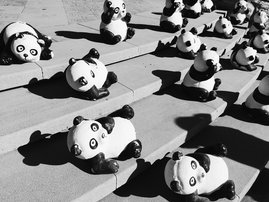 pandas on the stairs