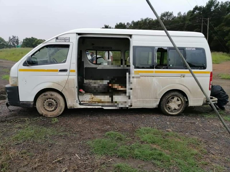 Dead cow in taxi