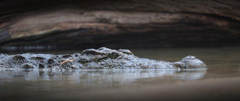 Crocodile attacks woman