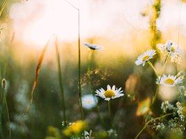 Unsplash/Spring