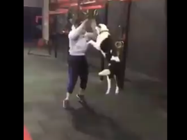dog at gym