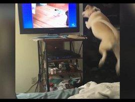 dog funny jump TV