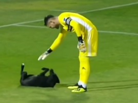 dog invades pitch