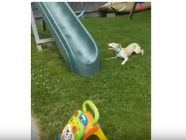 dog versus slide