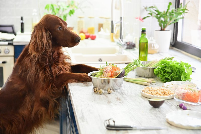 A dog chilling in the kitchen with food on the table
