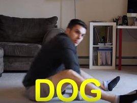 dogclip