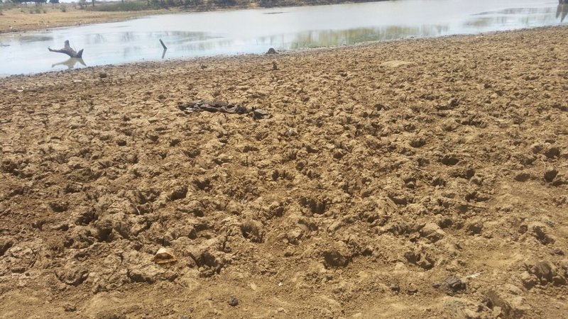 Limpopo Drought