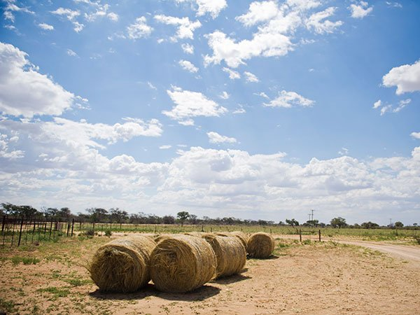 KZN drought: Sugarcane farmers to meet Agriculture Dept