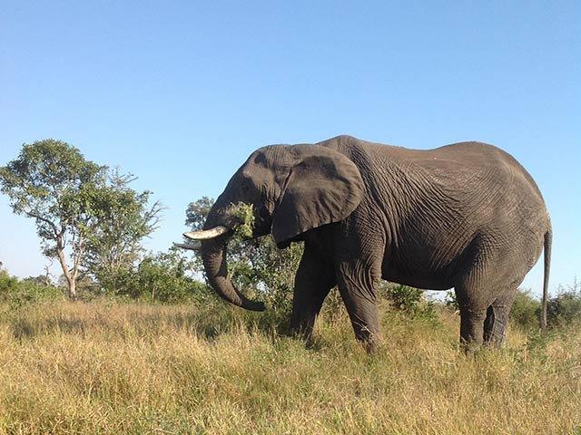 elephant_dm_EPK19LN.jpg