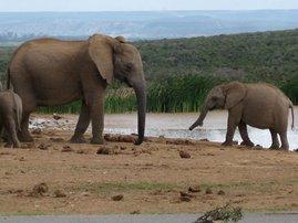 elephants_dm_OIt57nt.jpg
