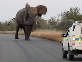 elephant police van