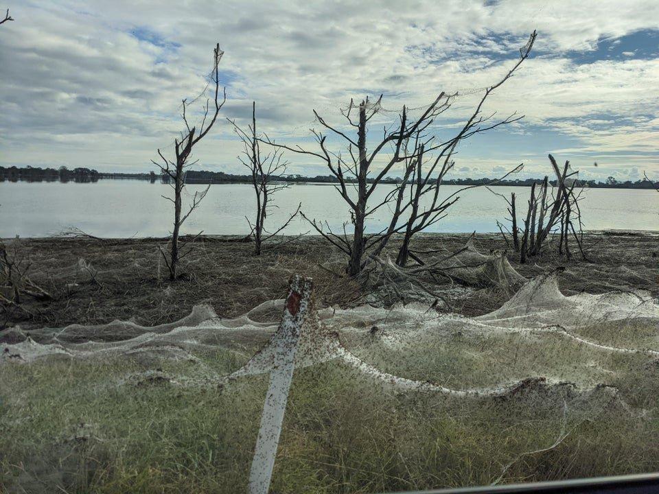Spiderwebs cover Victoria Australia