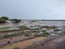 cogta flooding eloise