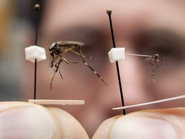 giant mosquito.jpg