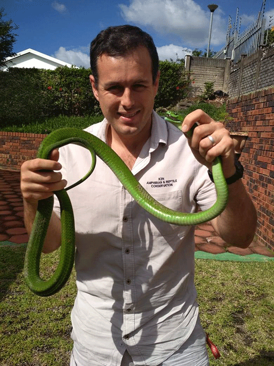 Green mamba found in Toti