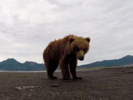 Bear slaps camera