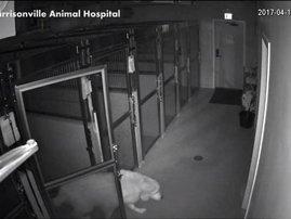 hero dog escapes hospital
