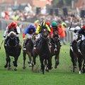 horseracing_gallo2_lo1J29f.jpg
