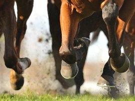 Horse racing action / iStock