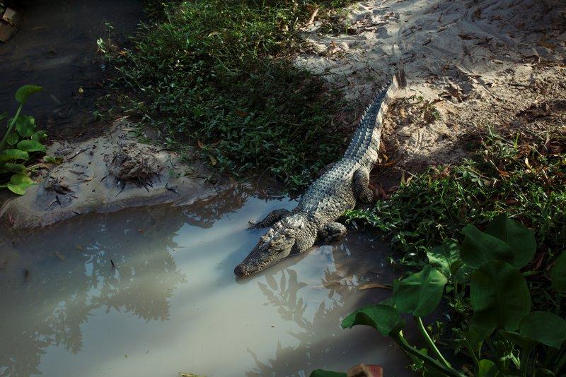 crocodile tongaat river