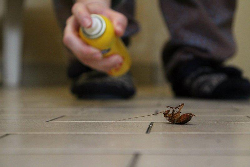 Spraying a cockroach / iStock