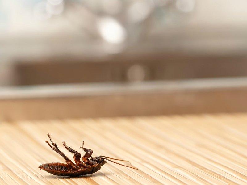 Cockroach kitchen