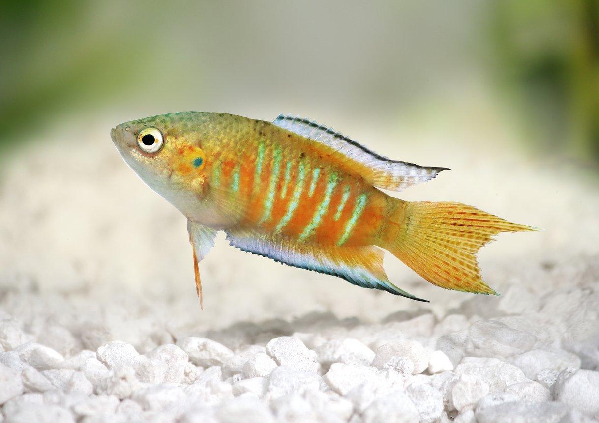 Fish aquarium in ecr - Freshwater Fish In Tank