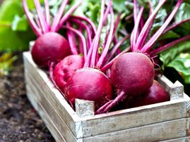Beetroot beets