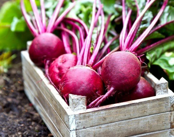 Beetroot beets