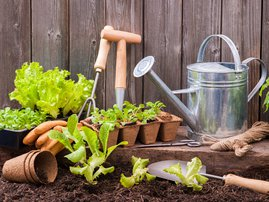 Tips To Start Growing A Small Vegetable Patch