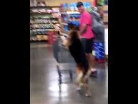 image dog shopping for groceries