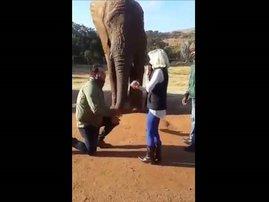 image elephant proposal adorable